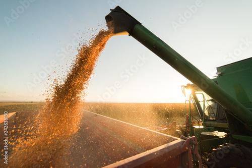Stampa su Tela Pouring corn grain into tractor trailer
