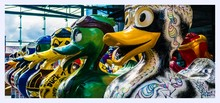 Liverpool Colourful Duck Statues