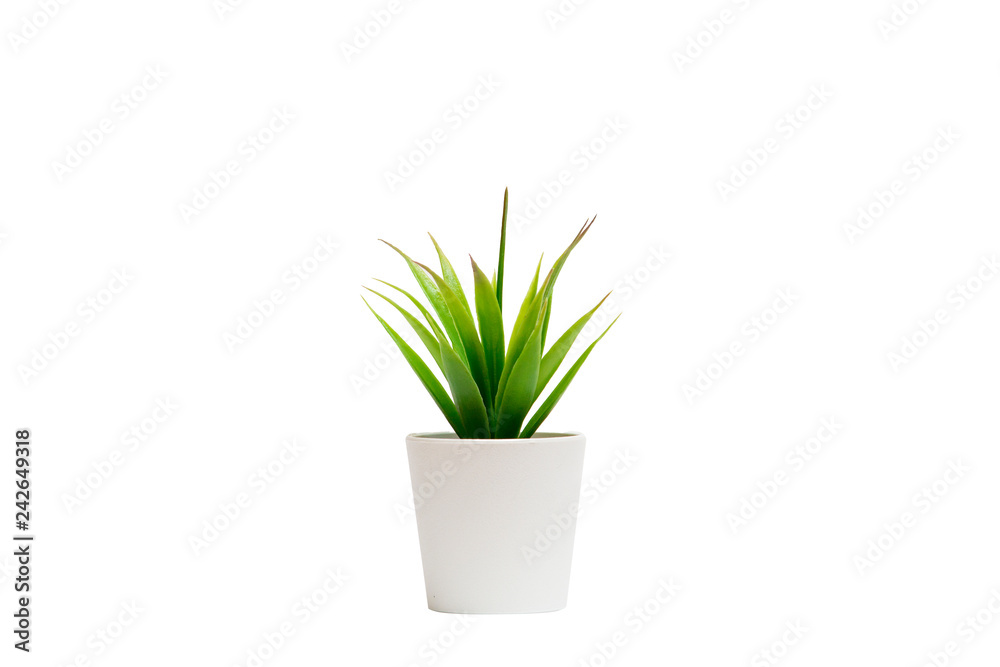 Fototapeta Small houseplant