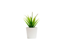 Small Houseplant