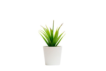 Small houseplant