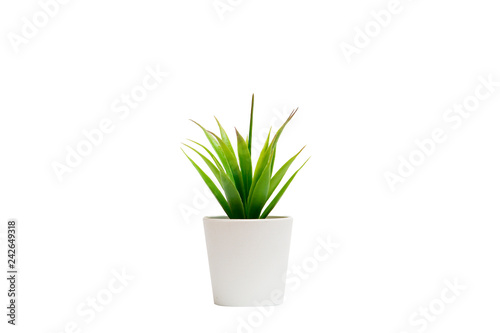 Fototapeta Small houseplant