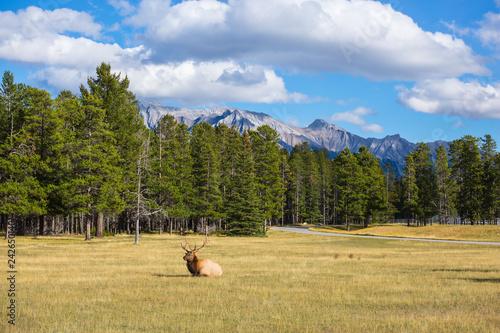 Fényképezés The deer has a rest