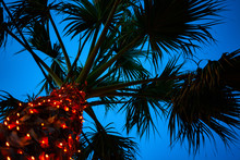 Upward Shot Of Tall Palm Tree Under Blue Sky. Tiny LED Lights Glittering Around The Trunk. Cable Wire Hanging Low Beneath The Leaves. Venue Design Ideas