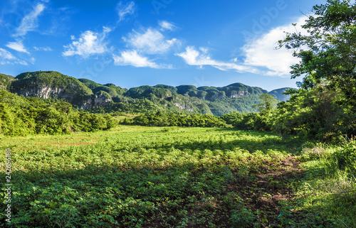 landscape of Vinales valley,Cuba Slika na platnu