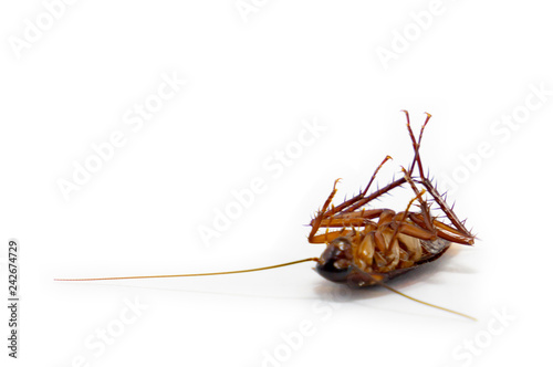 germs spread, Cockroach died isolated on white background.