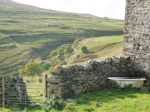 Spoed Foto op Canvas Khaki Yorkshire Dales stone wall and animal drink bath