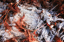 Iced Fern Winter Colorful Leaf And Grass Texture Background