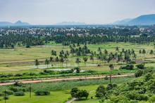 Coconut Trees Plantation At Gr...