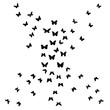 butterflies fly, background