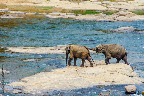 Tuinposter Asia land young elephants crossing the river
