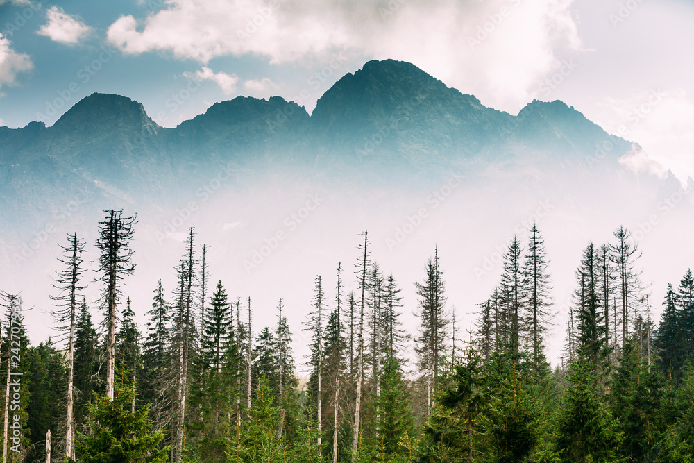Fototapety, obrazy: Tatra National Park, Poland. Summer Mountains And Forest Landsca