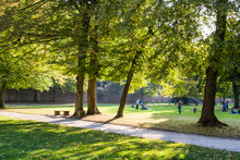 The Cozy And Green Park In Germany Near Historical Places. Botany. The Perfect Place For Walk On Narrow Footpaths.