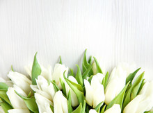 Flowers Background. A Bunch Of White Fresh Beautiful Tulips Bouquet Against Bright Background.