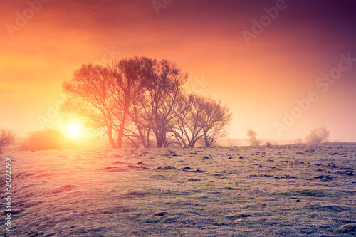 Wall mural - Fantastic foggy field in the sunlight. Location place Seret river, Ternopil.