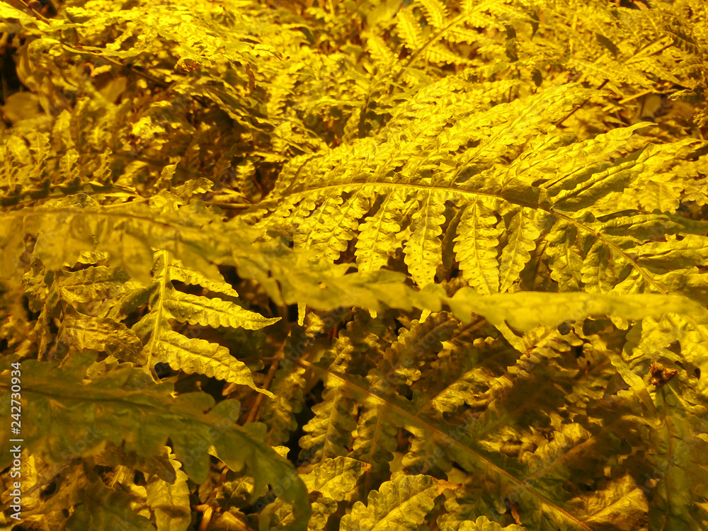 Obraz Kreatywna grafika roślinna świetnie nadaje się na tło baneru. Abstrakcyjne tło roślinne. Graficzny nowoczesny wzór.  fototapeta, plakat