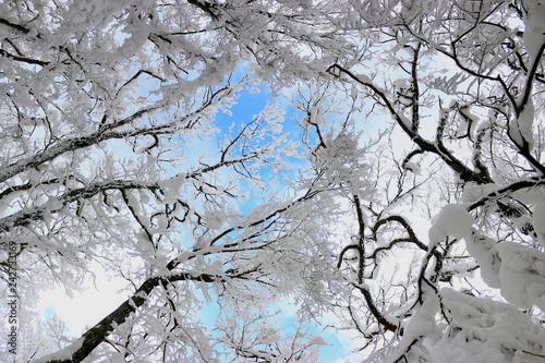 Cuadros en Lienzo  대한민국 제주도에 있는 한라 산의 겨울 풍경이다.