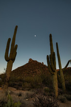 View Of Saguaro Cactus Against Clear Sky At Night