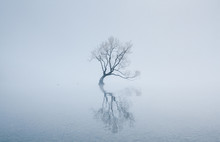 Reflection Of Bare Tree In Lake During Fog