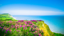 English Holiday Hilly Countryside With Purple Flowers By English Channel / Sea. Golden Cap On Jurassic Coast In Dorset, UK. Photo With Selective Focus.