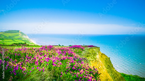 English holiday hilly countryside with purple flowers by English Channel / Sea Canvas Print