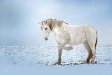 White Horse Beautiful Portrait...