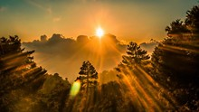 Surreal Sunrays Forest Landsca...