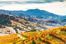 Alexander Valley Autumn - Ambe...