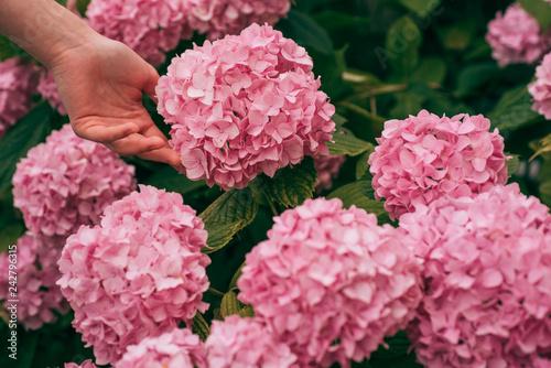 woman care of flowers in garden Fototapeta