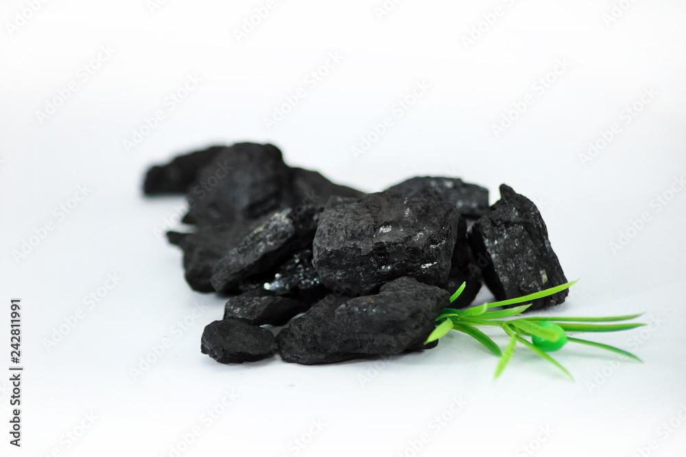 Fototapeta Węgiel kamienny z rośliną