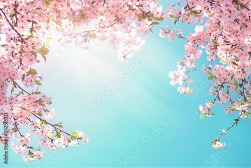 Frame of branches of blossoming cherry against background of blue sky and fluttering butterflies in spring on nature outdoors. Pink sakura flowers soft focus, dreamy romantic image of spring nature.
