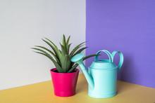 Aloe Vera Plant In A Multicolor Background