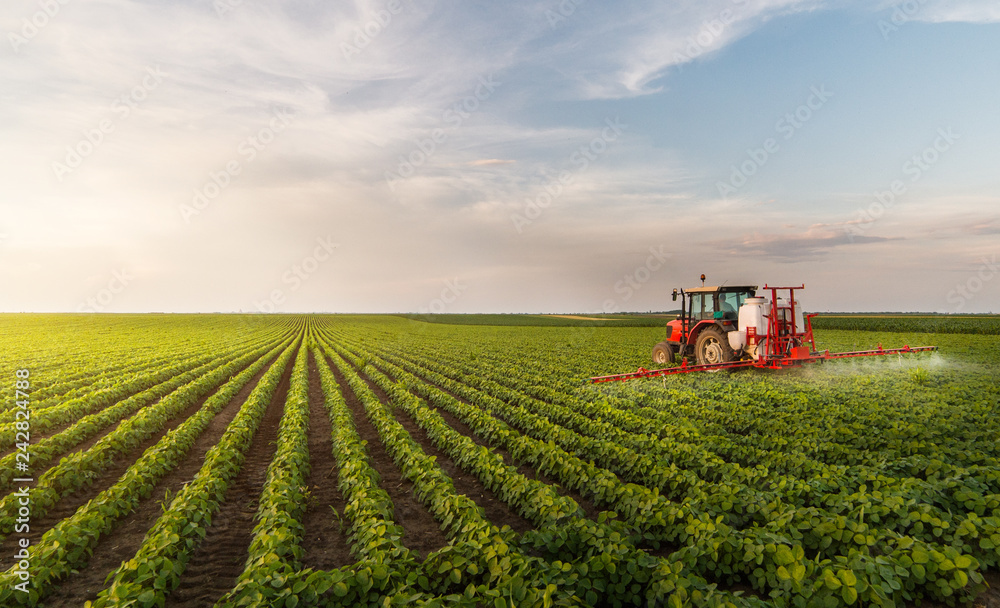 Obraz Tractor spraying pesticides at  soy bean field fototapeta, plakat