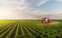 Tractor Spraying Pesticides At...