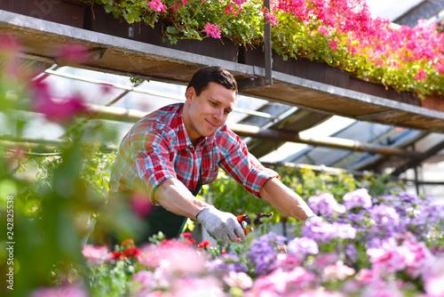 Gärtner im Blumengeschäft - Anbau von blumen im Gewächshaus // Gardener in a flower shop - growing flowers in a greenhouse