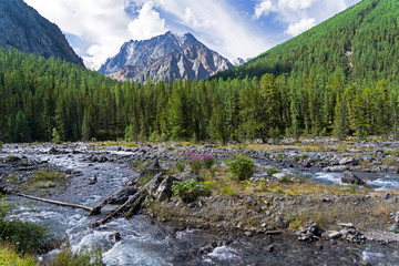 Altai Mountains. The Shawla River. Siberia, Russia.