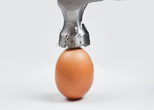 Hammer Is Breaking Chicken Egg. Concept Of Strength, Durability, Stress Resistance, Fortitude.