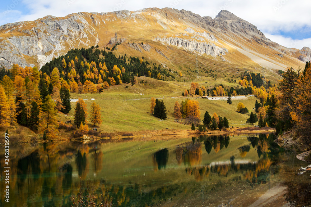 Fototapety, obrazy: Autumn scene at the palpuogna lake with beautiful yellow larch trees and mountain on background in Canton Grison, Switzeland