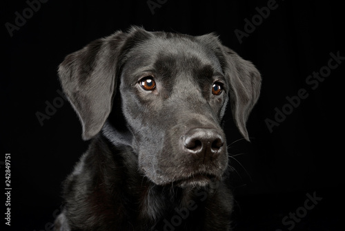 Stickers pour portes Chien Portrait of an adorable mixed breed dog
