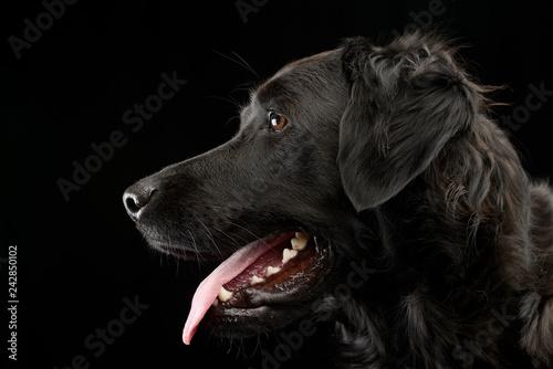 Obraz Portrait of an adorable mixed breed dog - fototapety do salonu