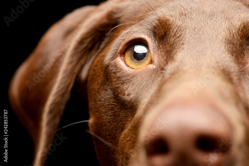 Fotografering  Portrait of an adorable mixed breed dog