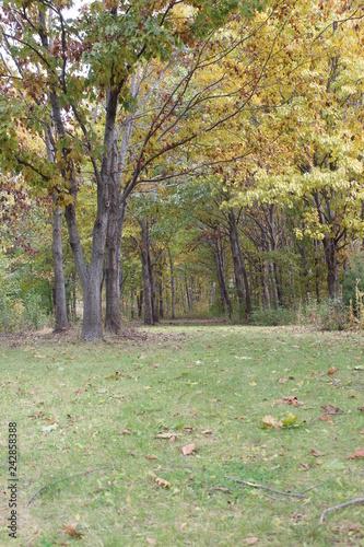 Spoed Foto op Canvas Fall tree