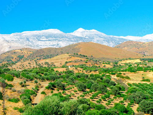 Picturesque landscape with green olive trees, yellow hills and mountain peaks in the snow. Greece, Crete. Mountain landscape of inland areas of the island.