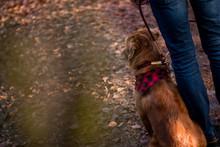 Hund Mit Herrchen Im Wald