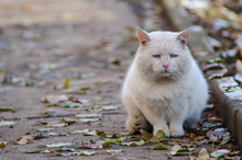 Sad Street Homeless Cat, Portrait Of An Old Cat
