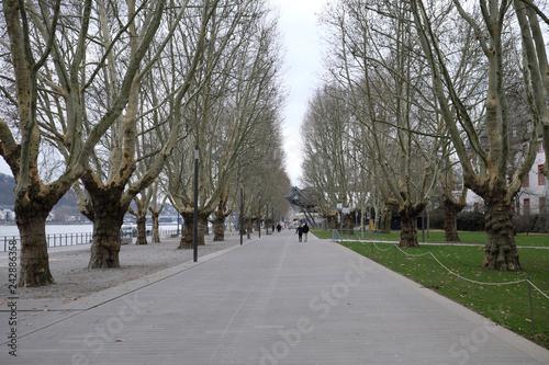 Foto  Koblenz Rheinpromenade an einem kalten Wintertag - Stockfoto