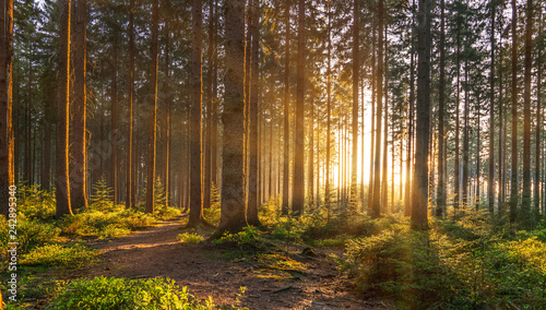 Poster Bois Silent Forest in spring with beautiful bright sun rays