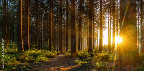 Fototapeta Silent Forest in spring with beautiful bright sun rays obraz
