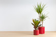 canvas print picture - bright living room with two houseplants in red plant pots