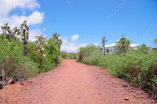 Fotografía  Outdoor view of typical vegetation of Galapagos Island with a sand path for visi